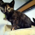 Erstausstattung für kleine Katzen